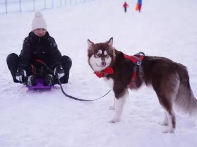 12.28携宠之旅,带着狗狗去滑雪