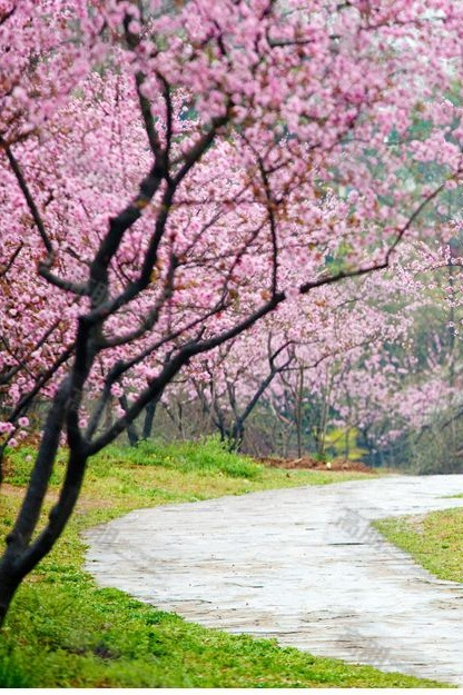 【梅花节】1月17-18日 荔波梅花季之大小七孔