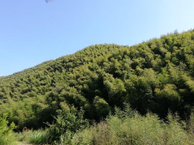 10月14下山坑村梅溪古道绿色出行双活动