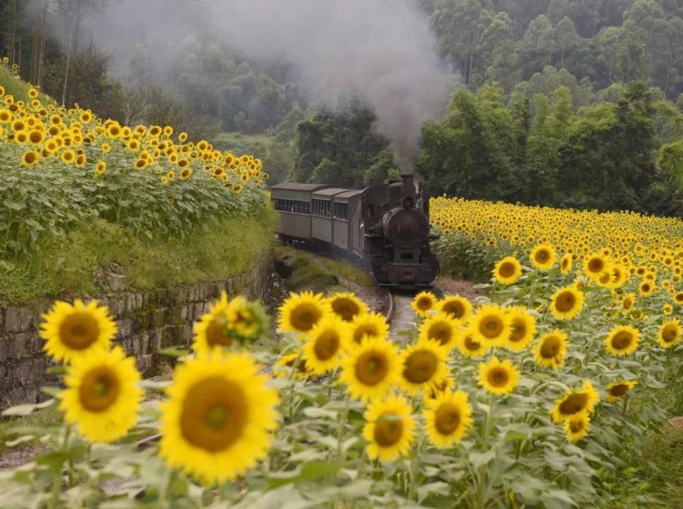 9月8号乐山嘉阳小火车一日游