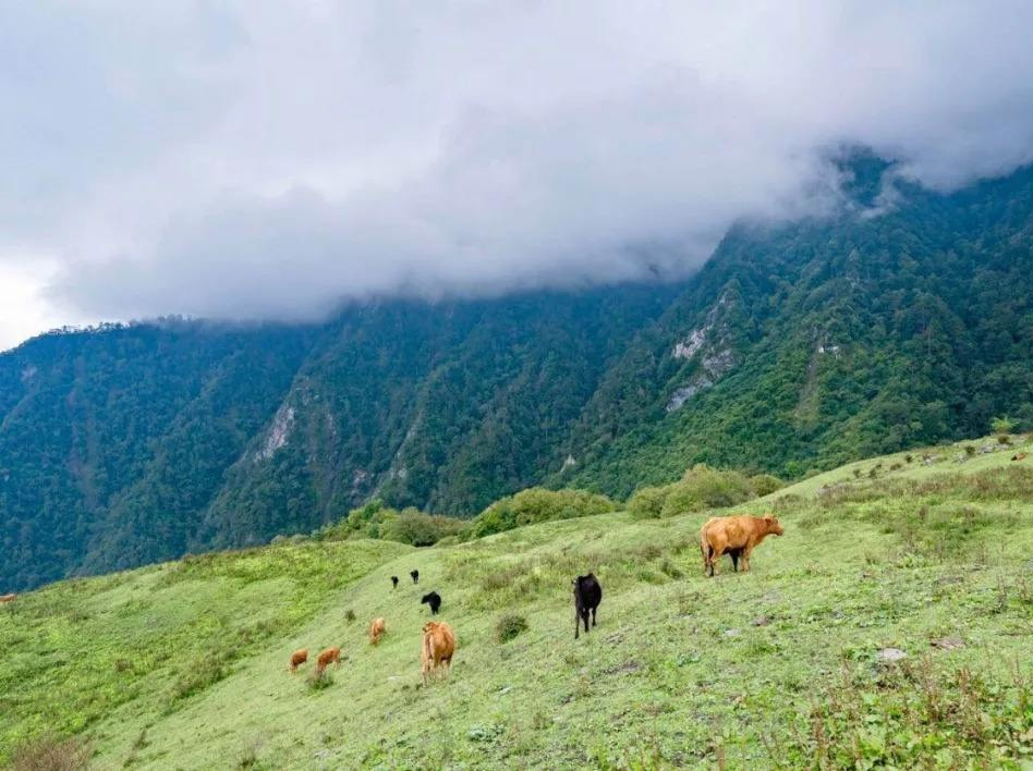 天天卧龙自然保护区云中牧场一日游