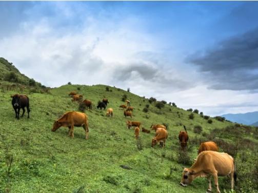 5月3号卓西牧场一日游?,体验农牧生活