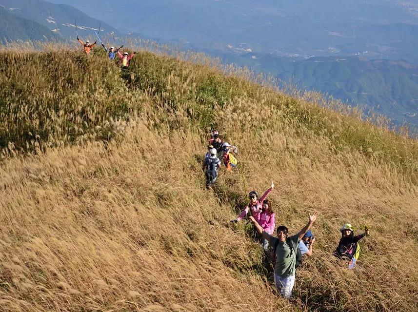 11月19日登千米高峰白云嶂,看漫山芦苇