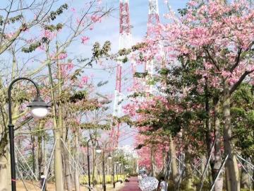 周二下午骑游横琴花海长廊和湿地公园