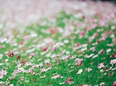 你的世界有匹骏马,我的心中有个草原!