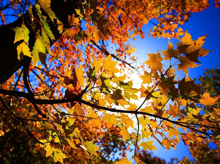 喇叭沟门赏红叶白桦林-一日秋天童话