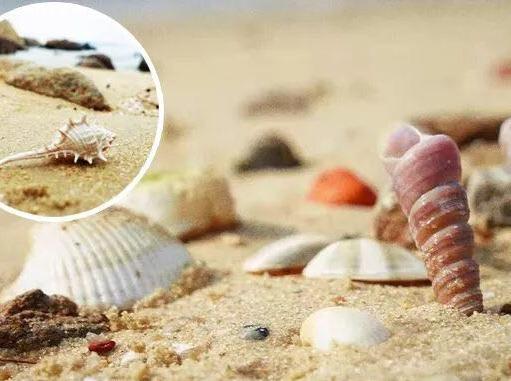 海螺角拾贝壳,徒步穿越5个未开发沙滩