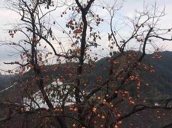 10月28日余姚柿林丹山赤水一日120元