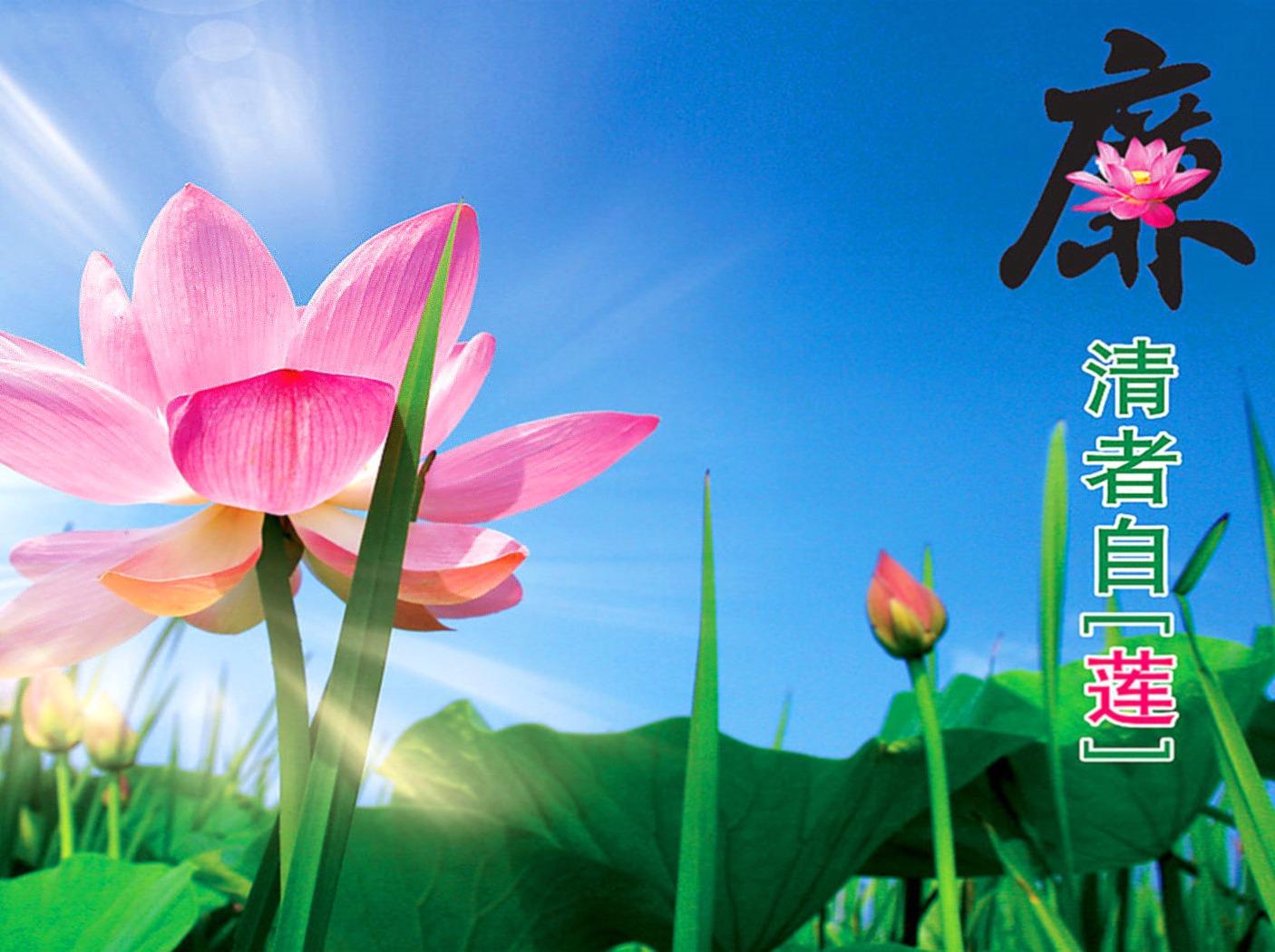 7.19,洪湖游湖,赏荷摘莲蓬,品湖家宴