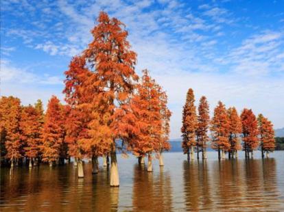 12月1日、赏四明湖红杉林、途步茭湖古道