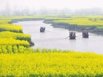清明假期约你寻梦扬州 兴化垛田 瘦西湖