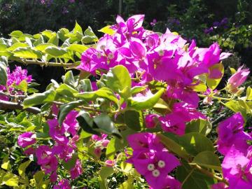 游香山,赏花