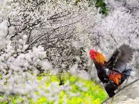 2.26周日│初春赏梅花,驴行平通梅林。