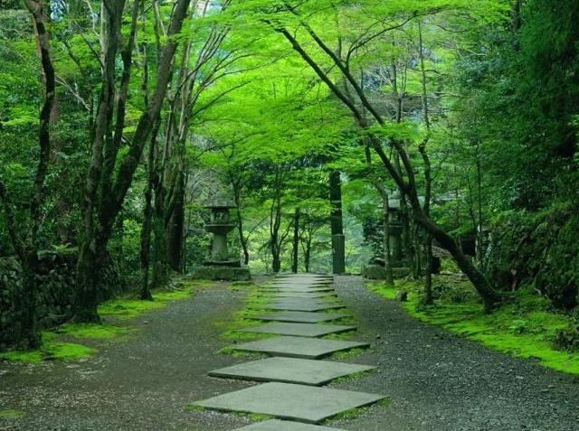 迷雾森林—之情驻林深处,沉醉不知归路
