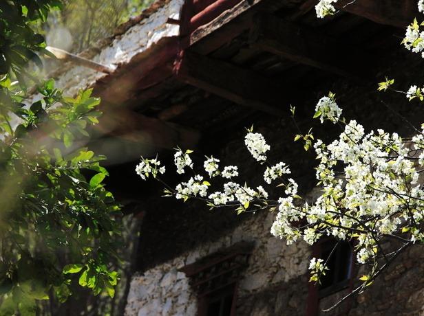 开启一场春天的旅程,一起去丹巴中路赏花
