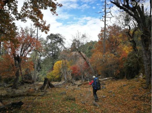 兰坪富和山徒步赏最美红叶约伴