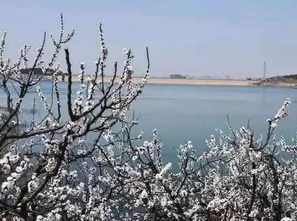 3.31号即墨马山+山色峪樱桃花海一日游