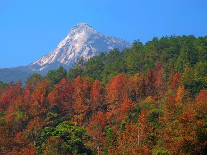 11月26日(周日)登云髻山赏枫叶泡温泉