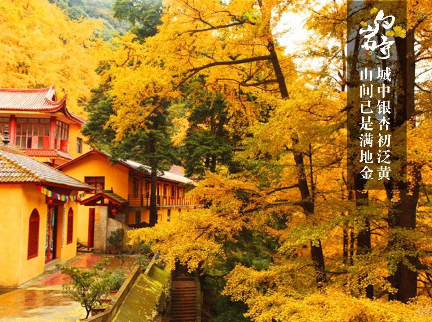 【一日游】周天白岩寺金黄色银杏小道赏秋色