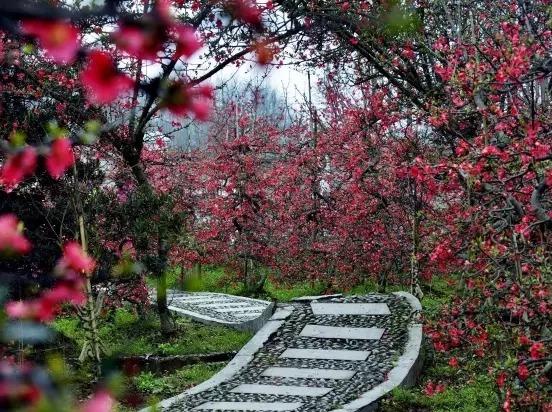 2月25日周六 春寻花开 安龙镇海棠花红