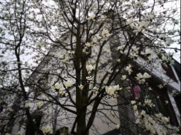 3.4 南山小环线赏花 为清明节出行二峰