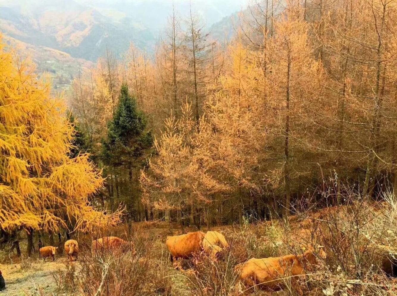 当深秋彩林偶遇冬至初雪 卧龙转经楼