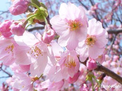 一起看桃花