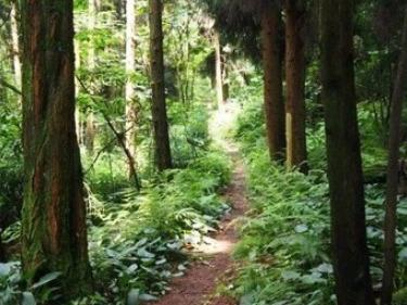 虹口徒步穿向峨乡*原始森林小道