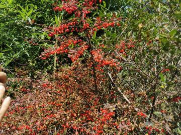 周日百丈崖赏红叶活动