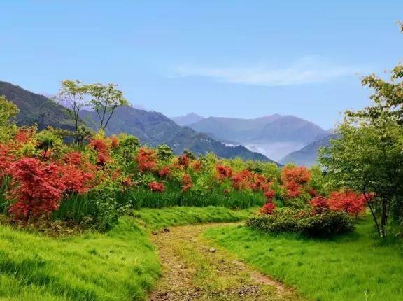 周日 红枫岭 轻徒步、摄影