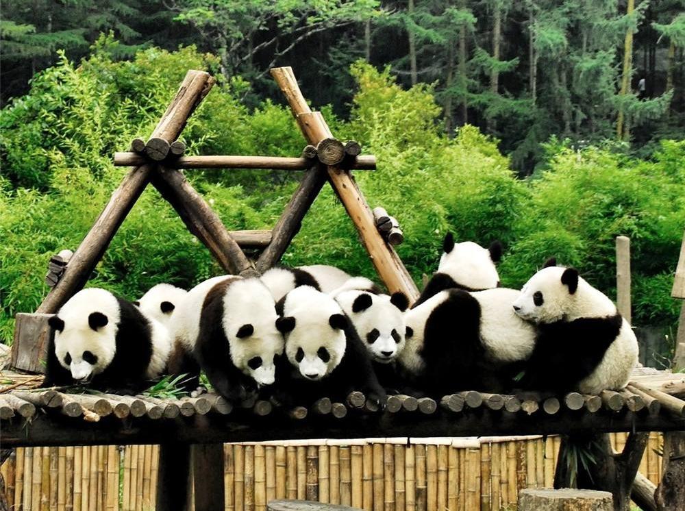 5号 碧峰峡风景区、野生动物园+上里古镇