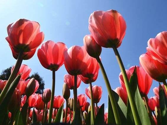 3月8日女士有优惠石象湖郁金香节嗨耍1日