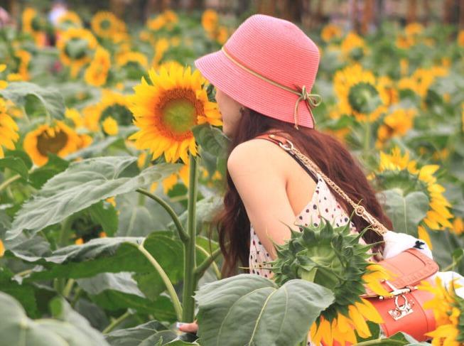 4月3日百万葵园赏花、看小松鼠休闲之旅