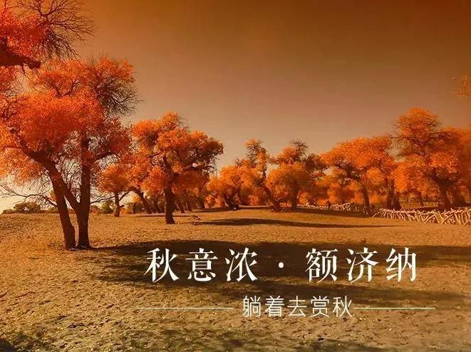 卧铺/大巴、青海湖-额济纳胡杨林-月牙泉