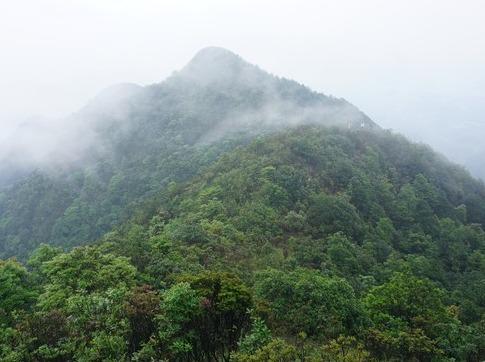 攀登从化十座高之一是黄茶园