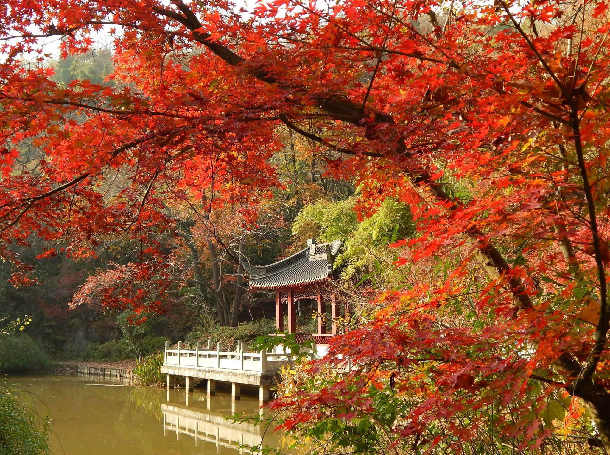 12月3日  栖霞赏枫、汤山温泉一日行