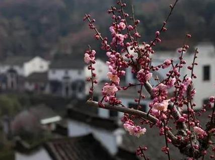 2.16-2.17卖花渔村,阳产土楼二日
