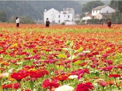 12月31日德保赏红枫叶、小西湖一日游