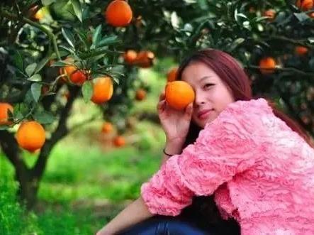12月23日上思采摘甜橙一日游68元/人