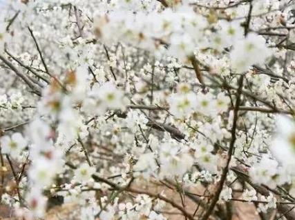 12.31从化古溪线看竹海、枫叶红