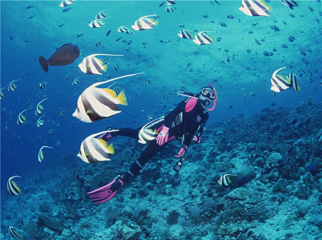 9月17日深圳南澳珊瑚潜水、快艇、烧烤