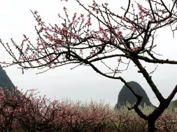 3月10日海洋看桃花赏梨花