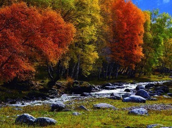 10月2日走进门源仙米林场.白桦林赏秋景
