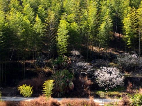 本周日:从化古溪线,竹林休闲徒步