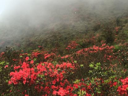 3月31日,天露山