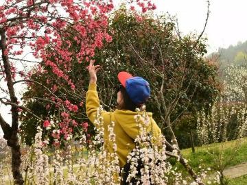 4.6周四非周末阳树线赏树山梨花爬山活动