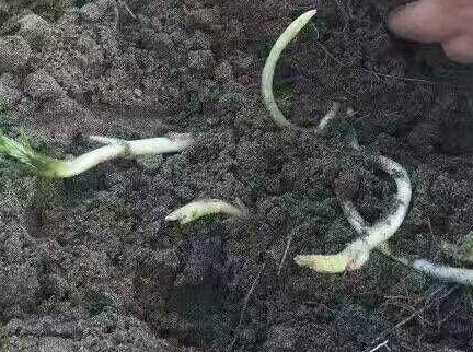 春天到了,一起去嘉鱼挖野菜吧~