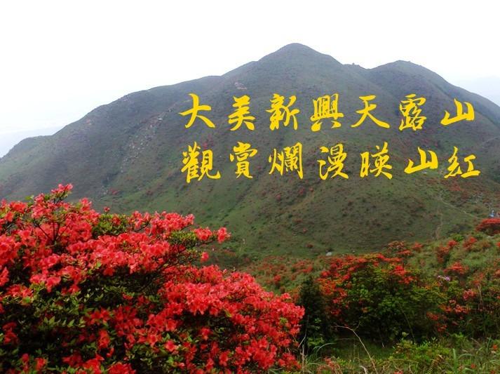 4月9日勇登天露山,入情人谷赏漫山杜鹃