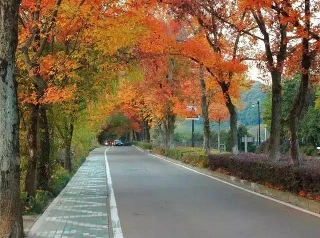 行摄杭州最美秋景赏九溪烟树红枫一日休闲游