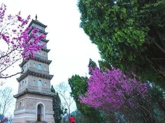 赏赤城山紫荆花,观石梁飞瀑一日特价游